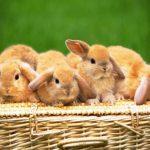 Разведение кроликов на мясо как бизнес