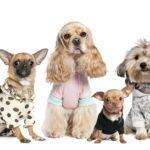 Бизнес на пошиве одежды для собак